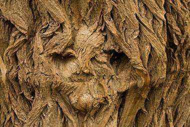 Freizeitaktivitäten | Gesichter in Baumrinden