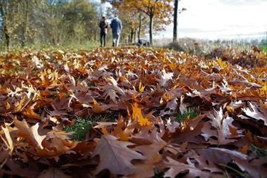 Freizeitaktivitäten für Paare   Herbstspaziergang
