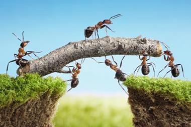 Freizeitaktivitäten | Ameisen zuschauen